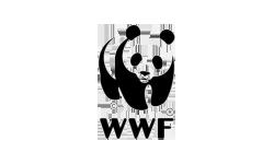 wwf-speak-talk-communicate-translations-traducciones-2
